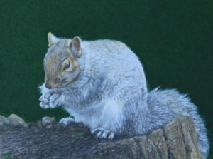 Squirrel 13X10cm November 2014